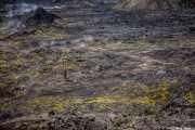 Lava humeante en la zona volvánica de Leirhnjúkur, Islandia, 2014