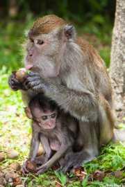 Monos en Batu Caves (09/09/2014)