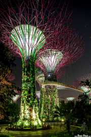 The Supertree Grove en Gardens by the bay (13/09/2014)