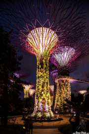 The Supertree Grove en Gardens by the bay (16/09/2014)