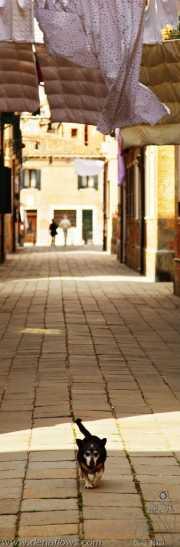080_vacaciones_san_prudencio_2010_venecia