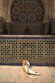 044_vacaciones_marzo-09_marruecos_fez