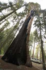 0006_vacaciones_sept08_sequoia_park_y_kings_canyon