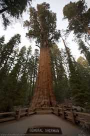 0026_vacaciones_sept08_sequoia_park_y_kings_canyon