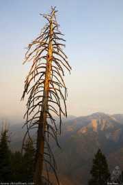 0015_vacaciones_sept08_sequoia_park_y_kings_canyon