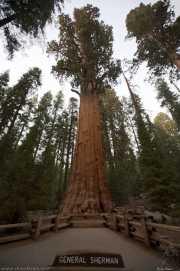 0026_vacaciones_sept08_sequoia_park_y_kings_canyon