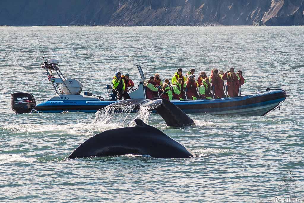 Avistamiento de ballenas en Húsavík, Islandia, 2014