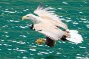 039_vacaciones_julio_2011_noruega_svolvaer_islas_lofoten