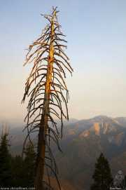 0015_vacaciones_sept08_sequoia_park_y_kings_canyon